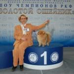 Золотой Ошейник 2008 г.
